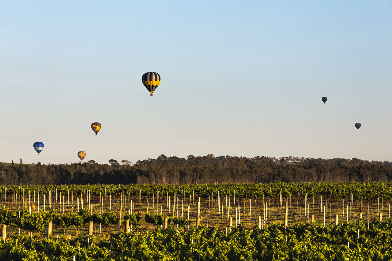 air vehicle, sky, mid-air, flying, balloon, hot air balloon, transportation, clear sky, nature, environment, landscape, beauty in nature, adventure, scenics - nature, mode of transportation, no people, plant, field, land, day, outdoors, ballooning festival