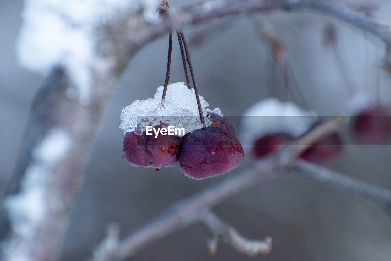CLOSE-UP OF ICE CREAM ON PLANT