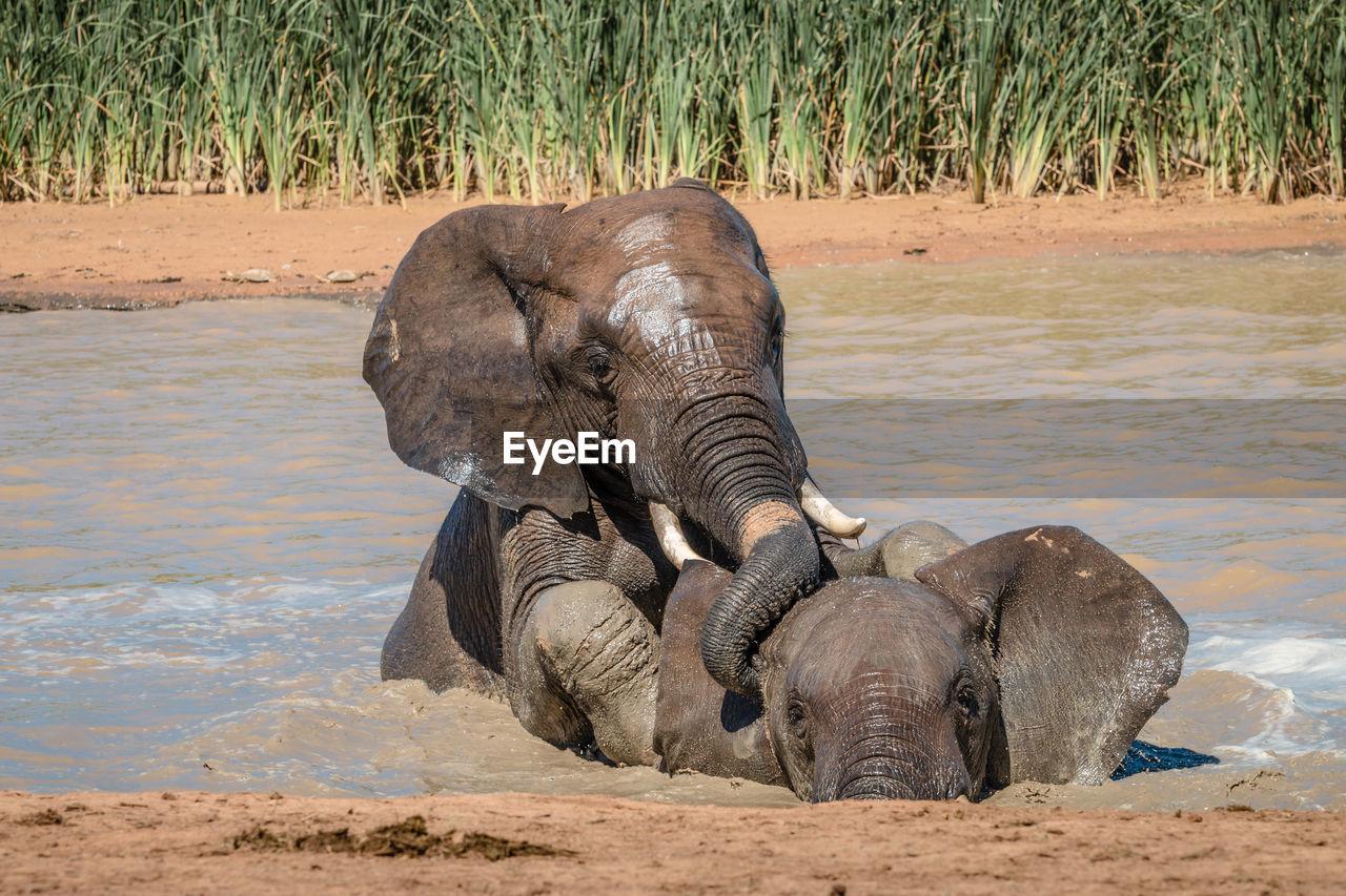 ELEPHANT ON A FIELD