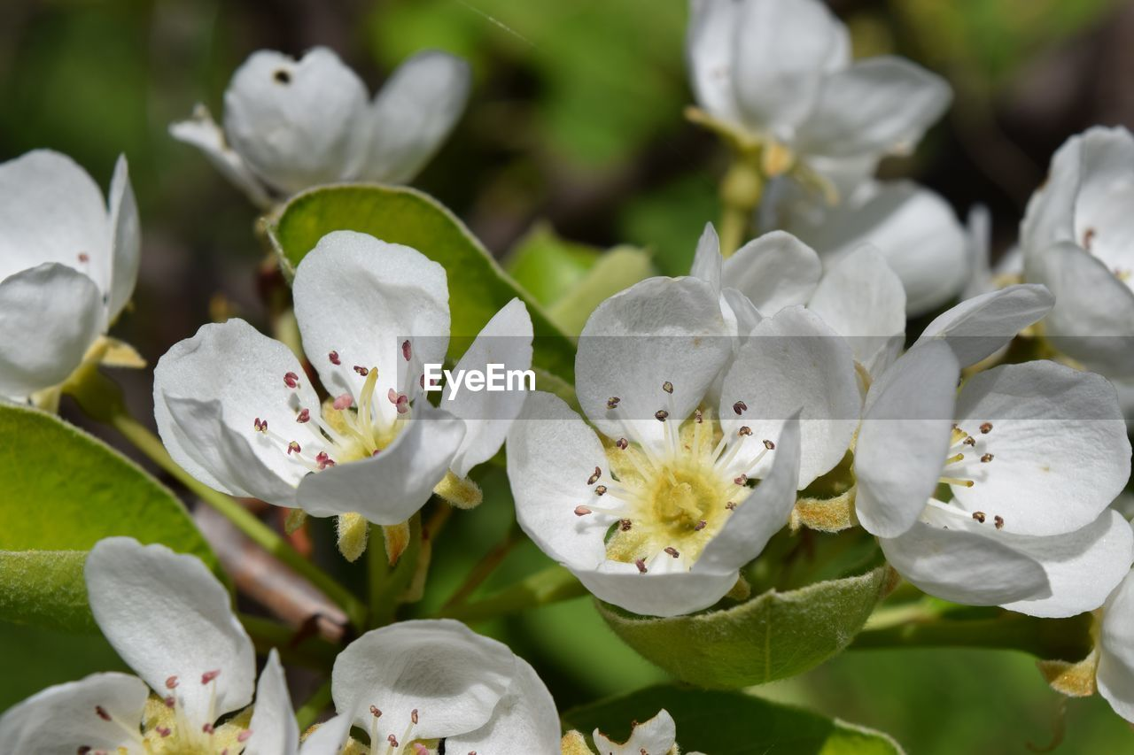 flower, flowering plant, plant, beauty in nature, growth, fragility, vulnerability, freshness, petal, close-up, white color, inflorescence, flower head, pollen, focus on foreground, no people, nature, day, stamen, outdoors, springtime