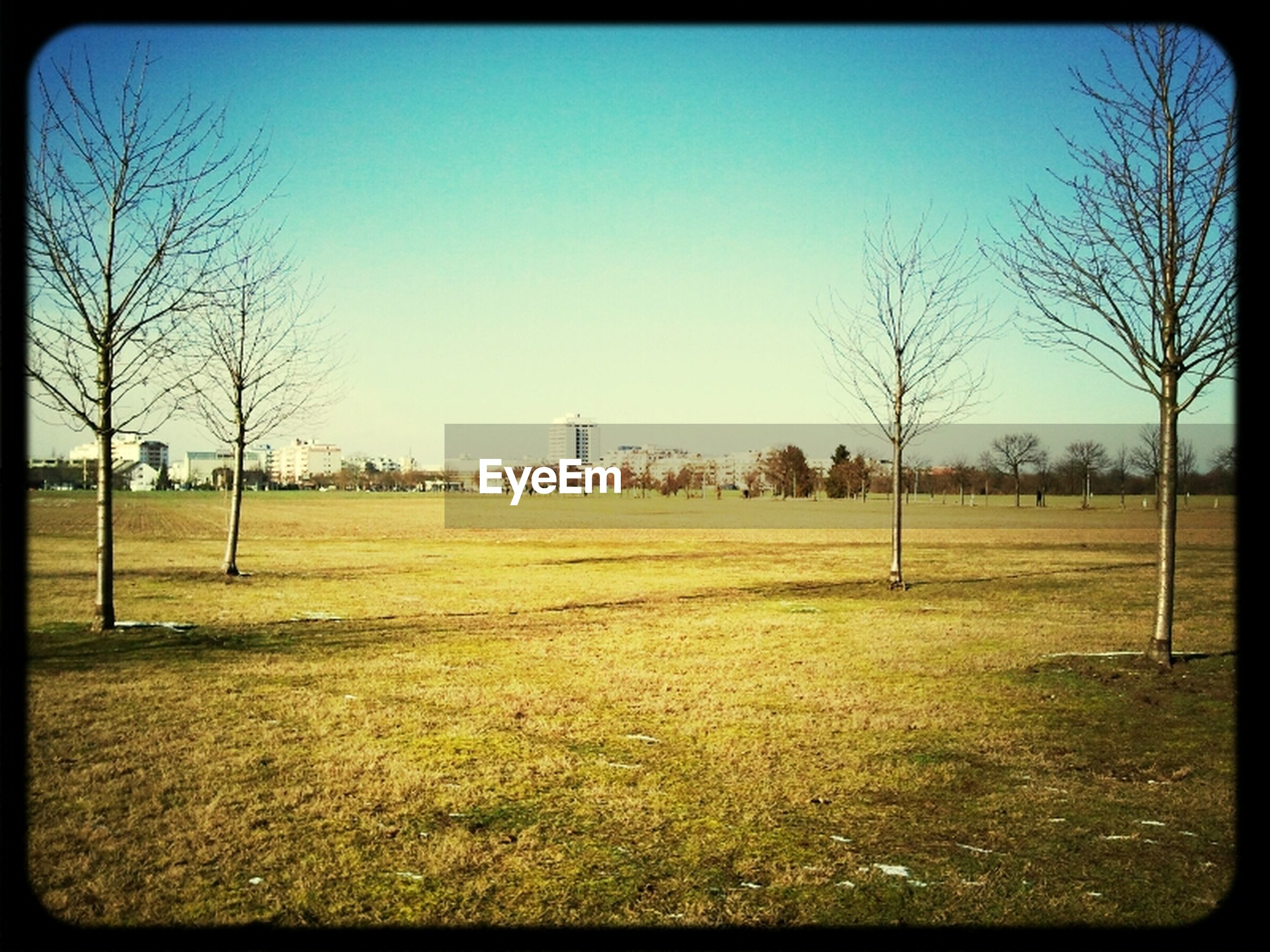 transfer print, bare tree, clear sky, tree, grass, auto post production filter, field, landscape, tranquility, tranquil scene, grassy, blue, nature, scenics, copy space, sky, beauty in nature, branch, no people, outdoors
