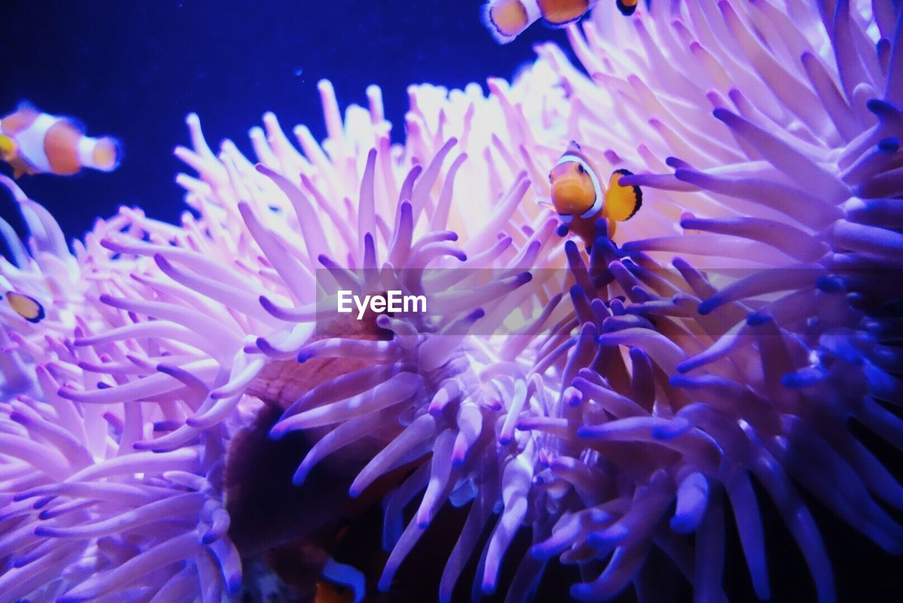 underwater, nature, beauty in nature, animal themes, water, sea life, clown fish, undersea, coral, animals in the wild, sea, no people, sea anemone, close-up, fragility, day, outdoors