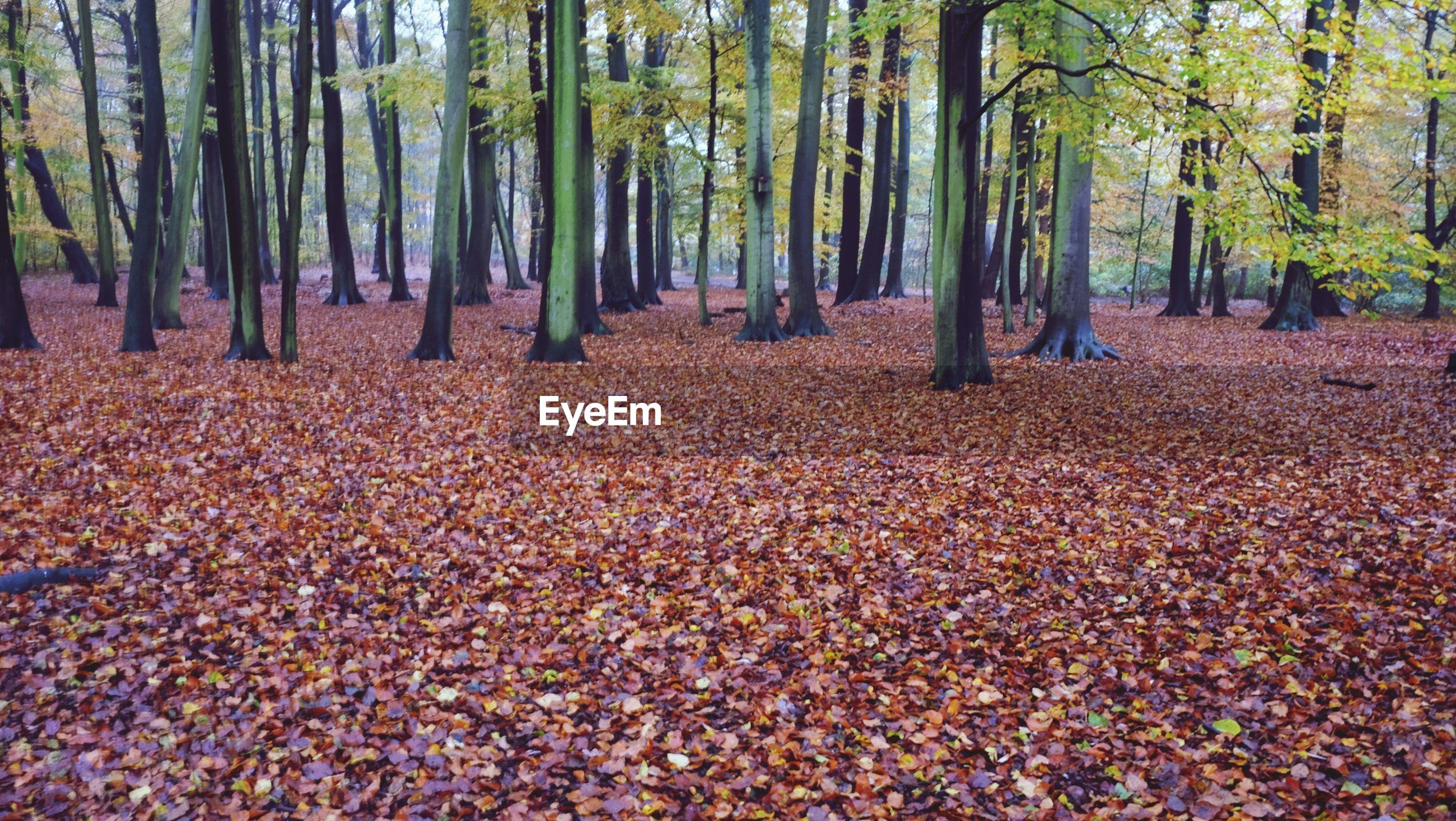 SCENIC VIEW OF AUTUMN TREE