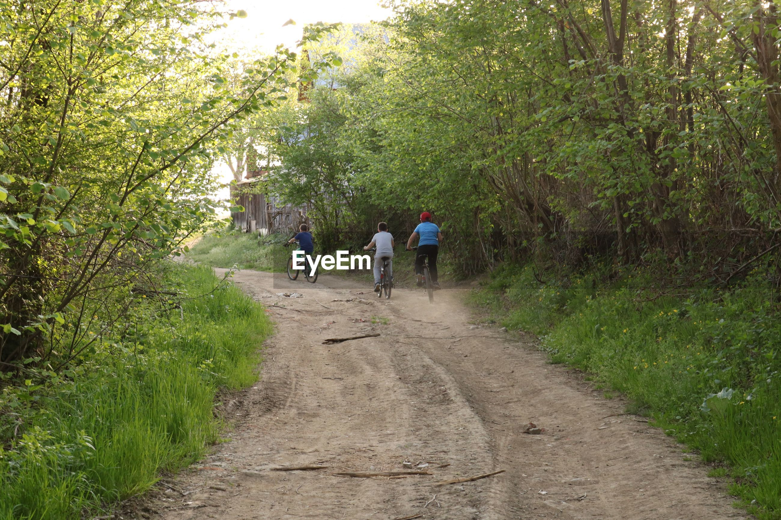Rear view of friends riding bicycle on dirt road amidst trees