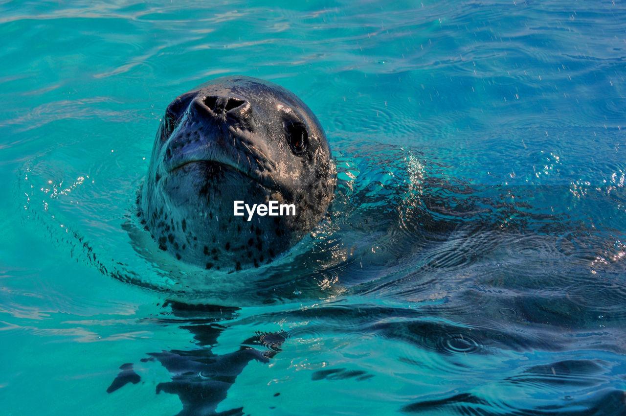 High angle close-up of seal