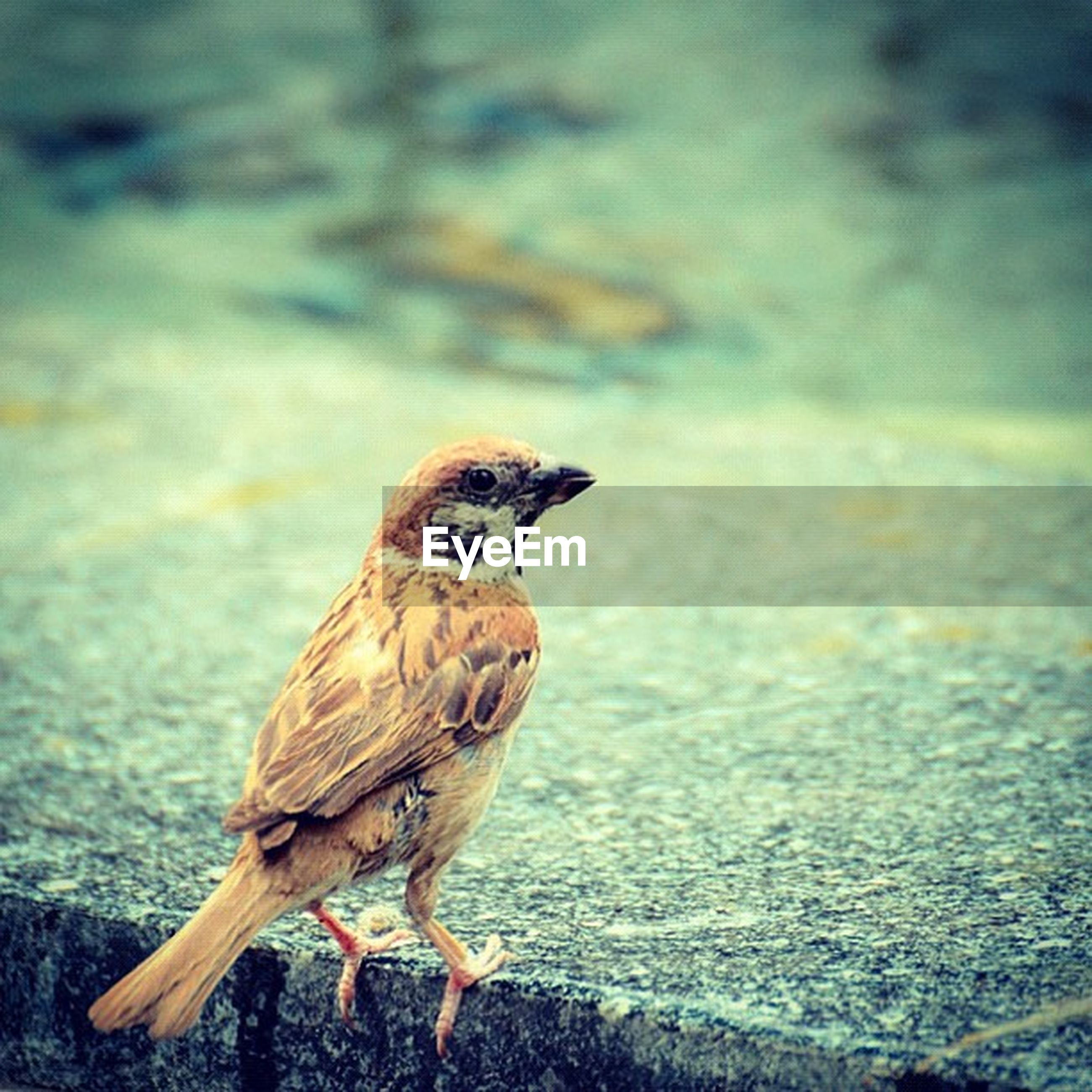animal themes, animals in the wild, one animal, wildlife, focus on foreground, bird, side view, full length, close-up, nature, outdoors, day, looking away, standing, no people, field, zoology, sunlight, walking, street