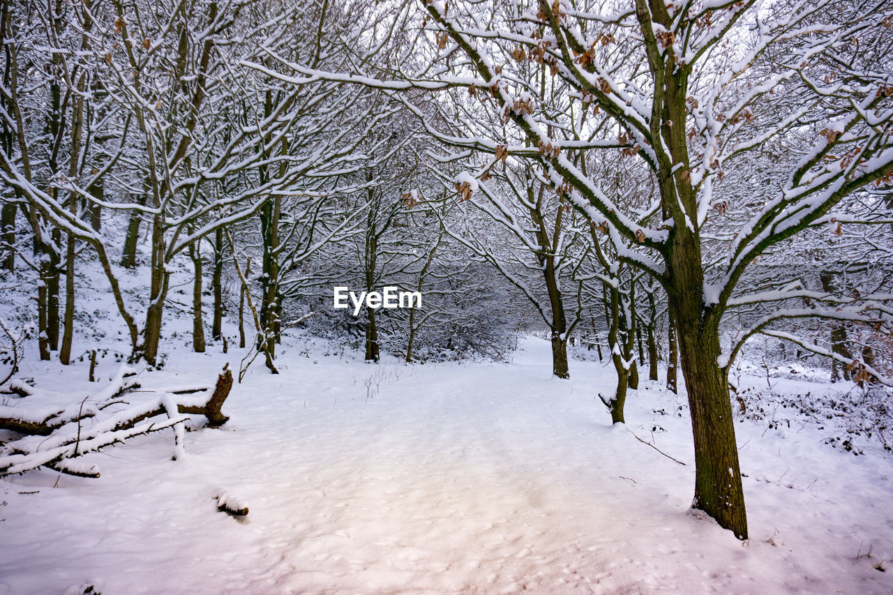 winter, snow, cold temperature, nature, white color, tranquility, no people, beauty in nature, tree, outdoors, scenics, bare tree, day