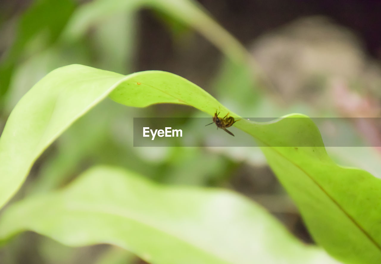 insect, invertebrate, plant part, green color, animal themes, leaf, one animal, animals in the wild, animal wildlife, animal, close-up, plant, growth, day, selective focus, nature, no people, focus on foreground, ant, beauty in nature, outdoors