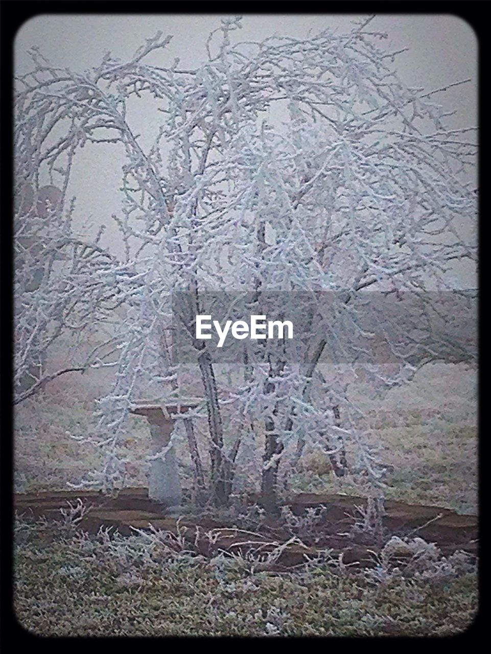 no people, day, outdoors, tree, winter, bare tree, nature, cold temperature, branch, close-up, beauty in nature