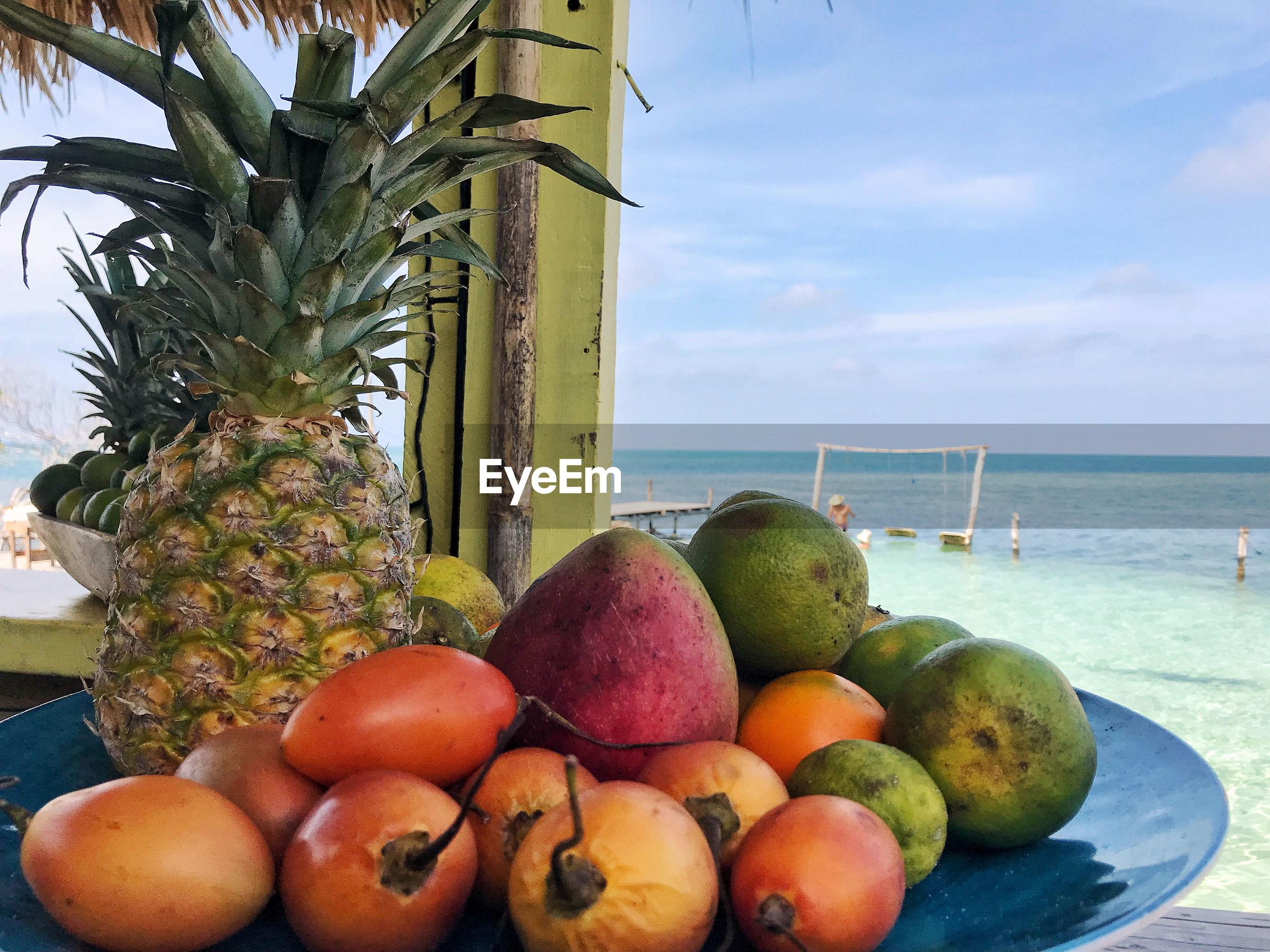 FRUITS GROWING ON SEA SHORE