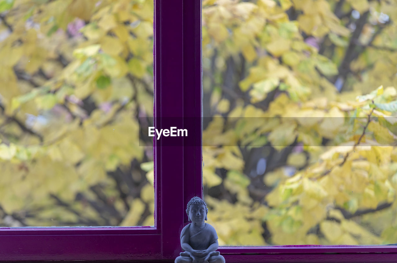 focus on foreground, metal, close-up, day, no people, glass - material, outdoors, plant, window, transparent, tree, black color, nature, selective focus, plant part, leaf, growth, security, yellow