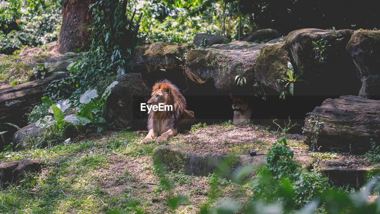 mammal, animal themes, one animal, animal, vertebrate, plant, animals in the wild, tree, nature, animal wildlife, day, no people, rock, land, solid, forest, rock - object, dog, pets, canine, outdoors