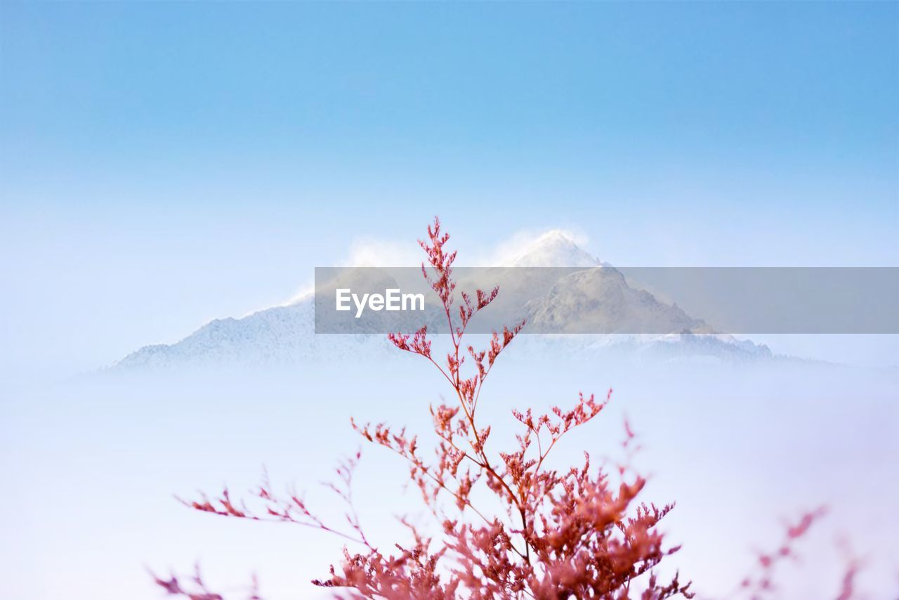 sky, beauty in nature, scenics - nature, tranquility, mountain, tranquil scene, nature, plant, no people, tree, day, cold temperature, outdoors, winter, cloud - sky, low angle view, snow, non-urban scene, branch, mountain peak