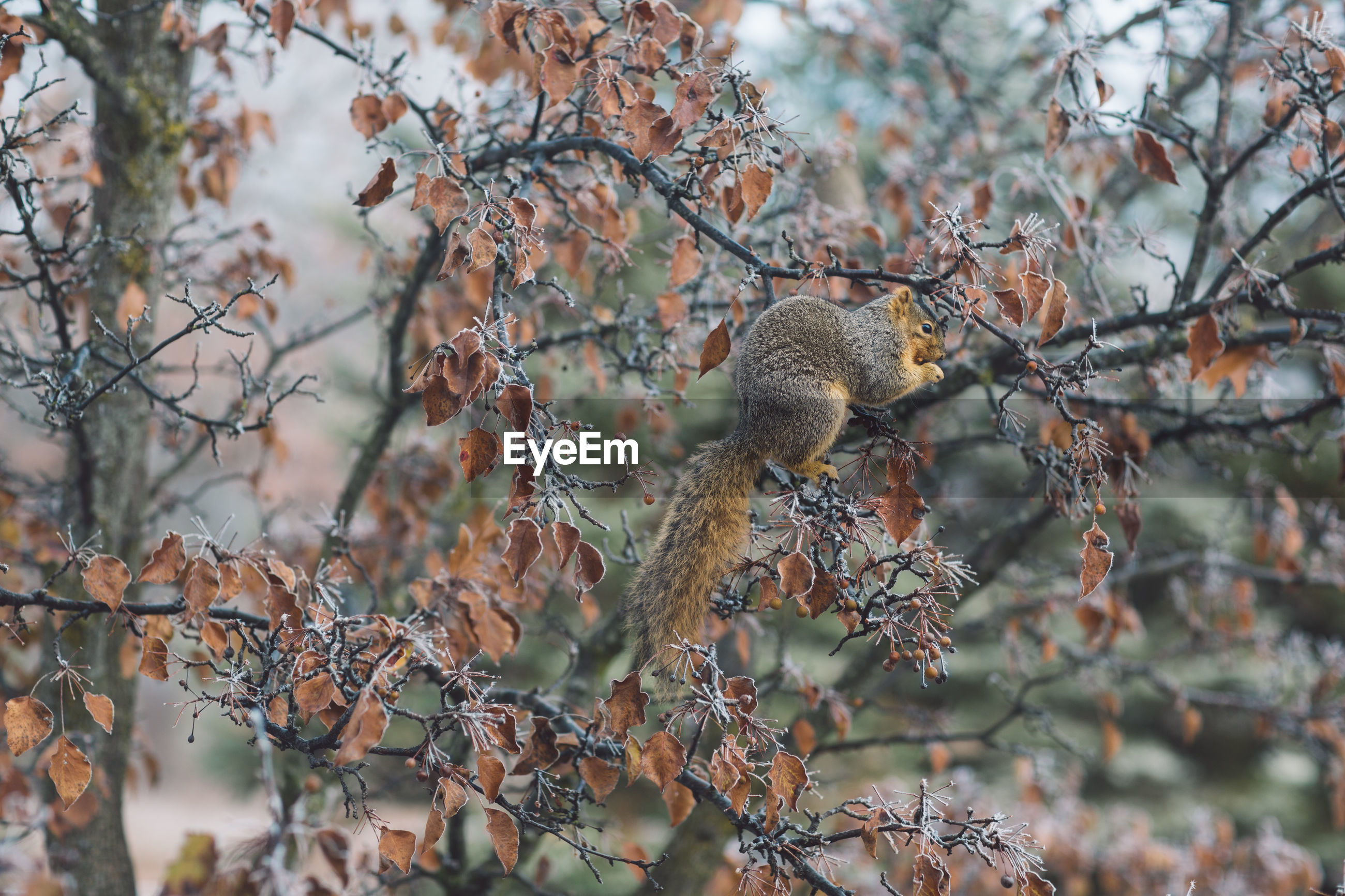 View of a squirrel in a tree