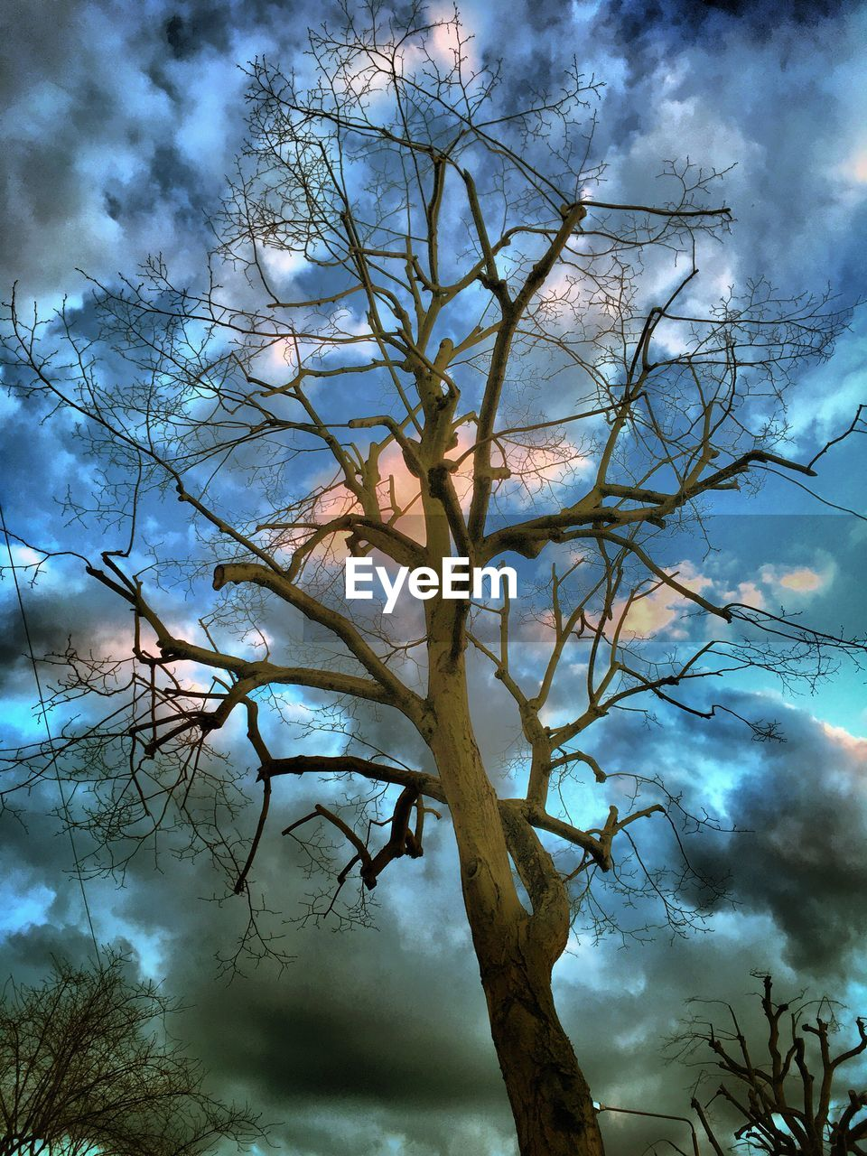 tree, branch, sky, nature, cloud - sky, low angle view, beauty in nature, bare tree, outdoors, no people, day, growth, tranquility, scenics