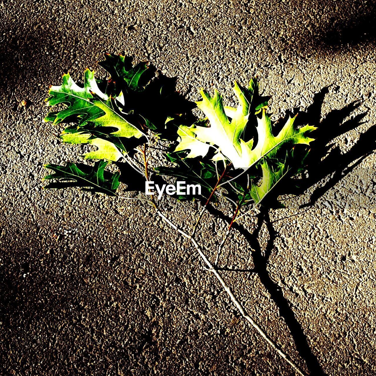 growth, leaf, plant, nature, sunlight, no people, outdoors, day, shadow, close-up, fragility, freshness