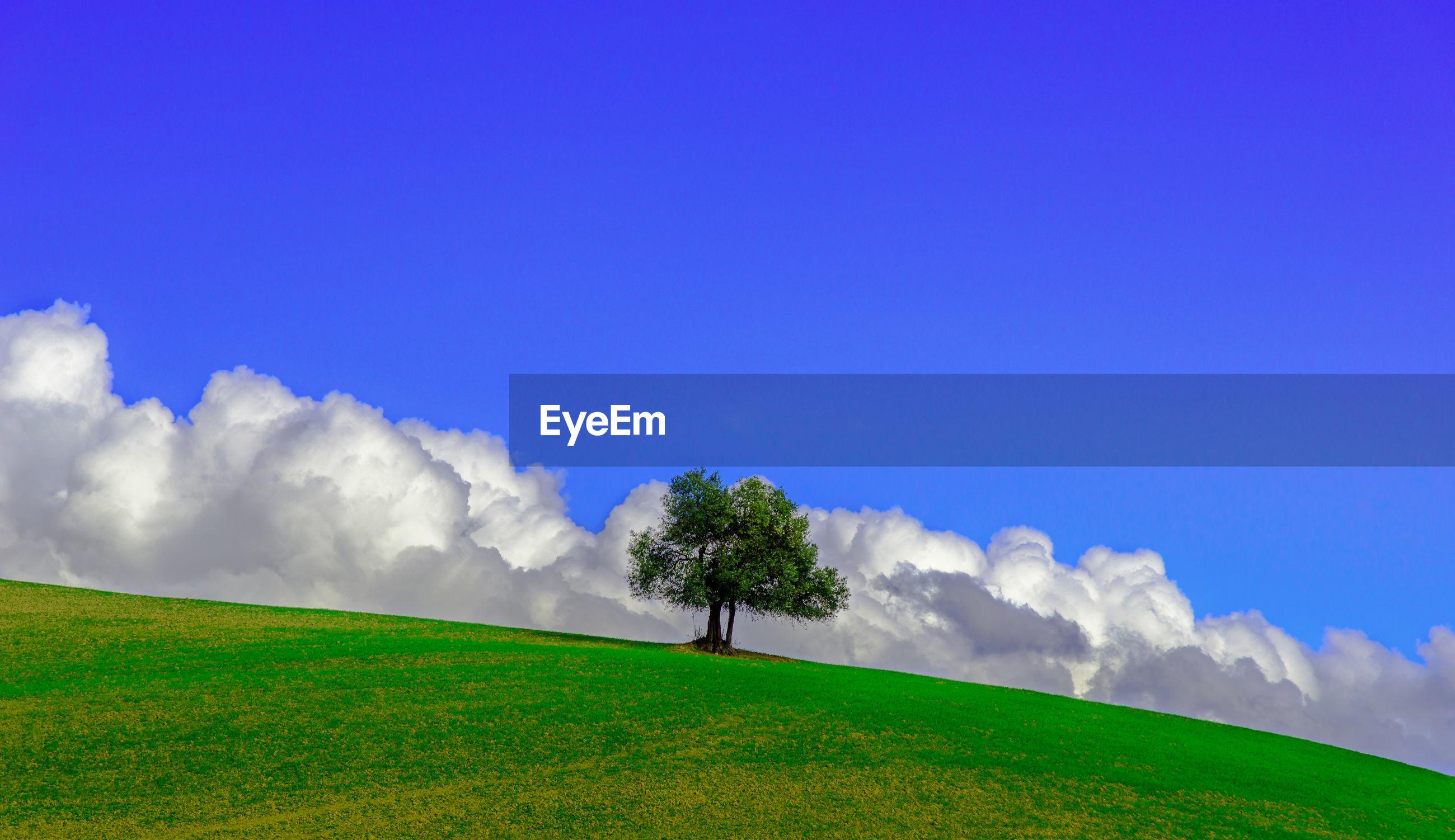 TREE ON FIELD AGAINST BLUE SKY