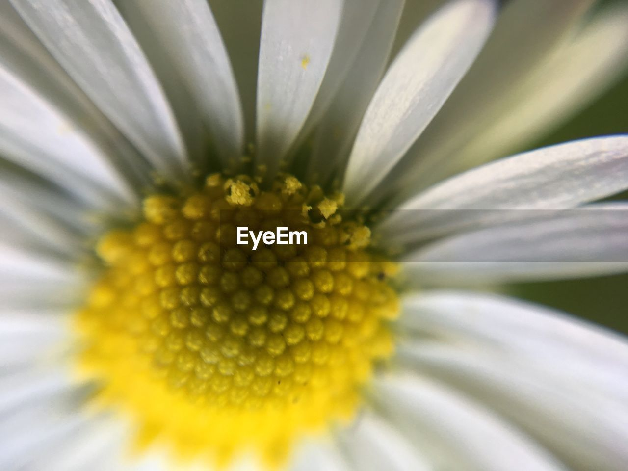 flower, petal, fragility, flower head, beauty in nature, freshness, nature, pollen, growth, yellow, close-up, day, plant, outdoors, no people, blooming, springtime