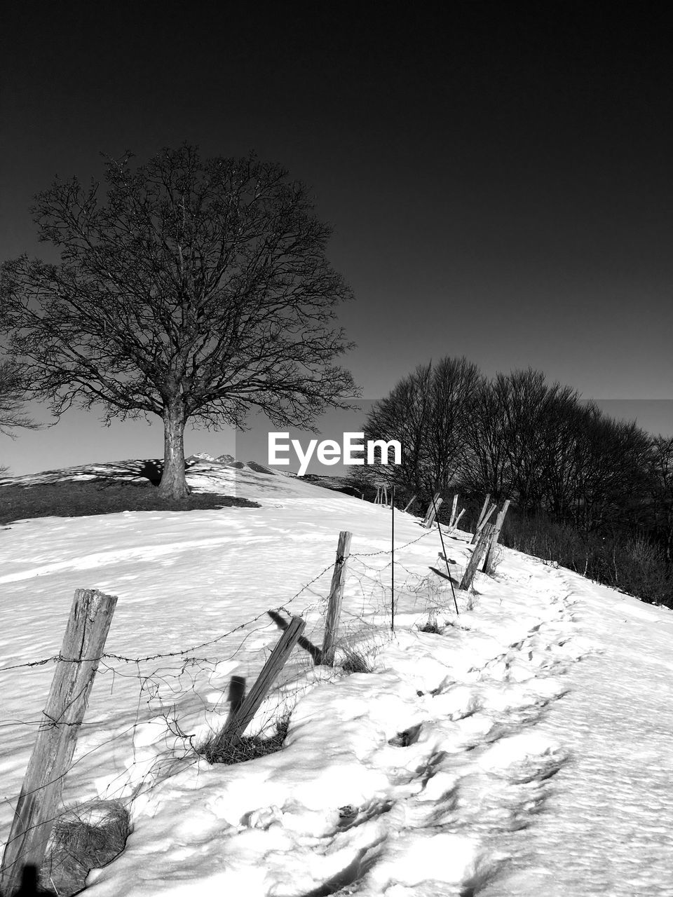 snow, cold temperature, winter, tree, plant, field, covering, beauty in nature, scenics - nature, nature, sky, barrier, boundary, fence, environment, land, tranquility, bare tree, landscape, no people, outdoors, snowcapped mountain