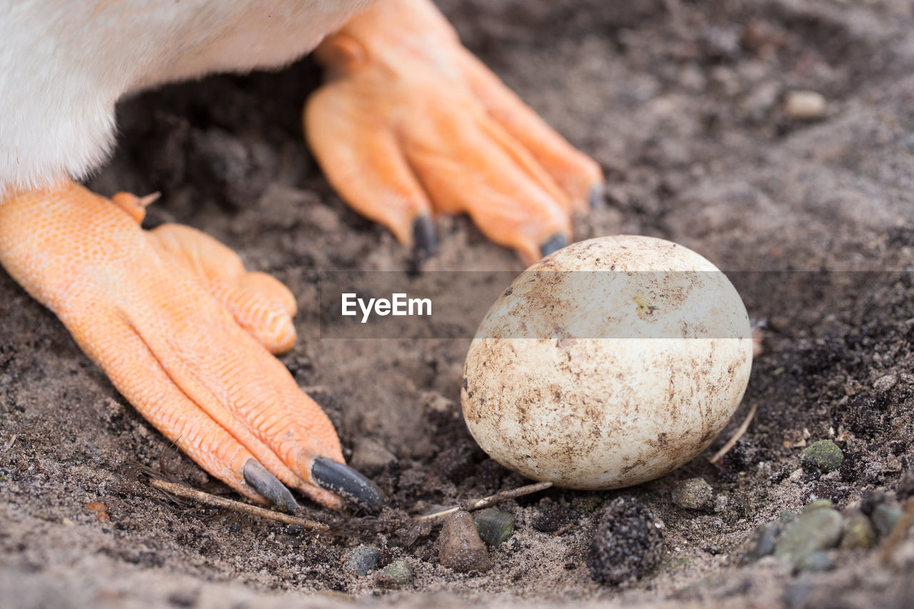 Low section of bird by egg