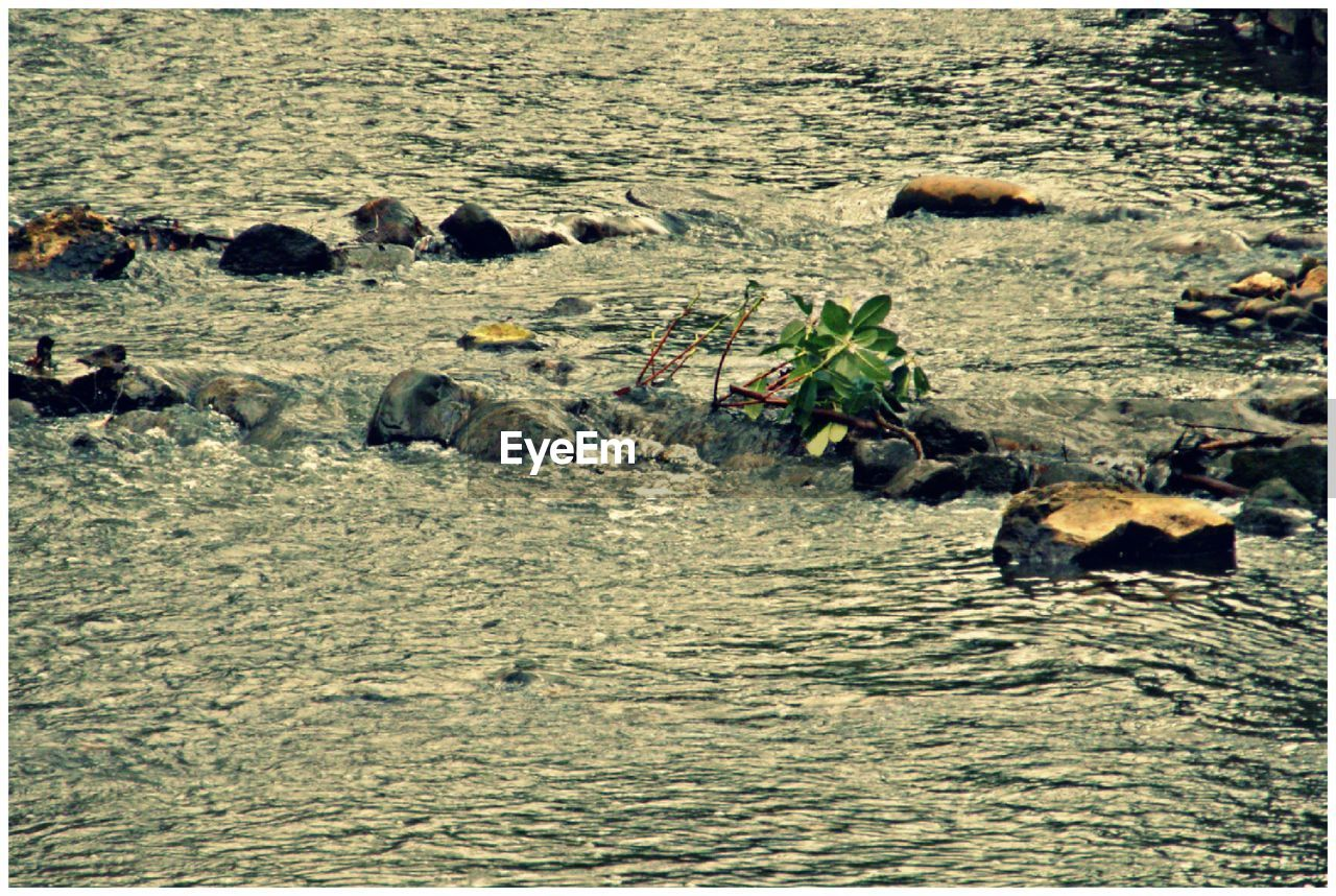 animal themes, animals in the wild, river, large group of animals, no people, outdoors, nature, day, water, swimming, mammal