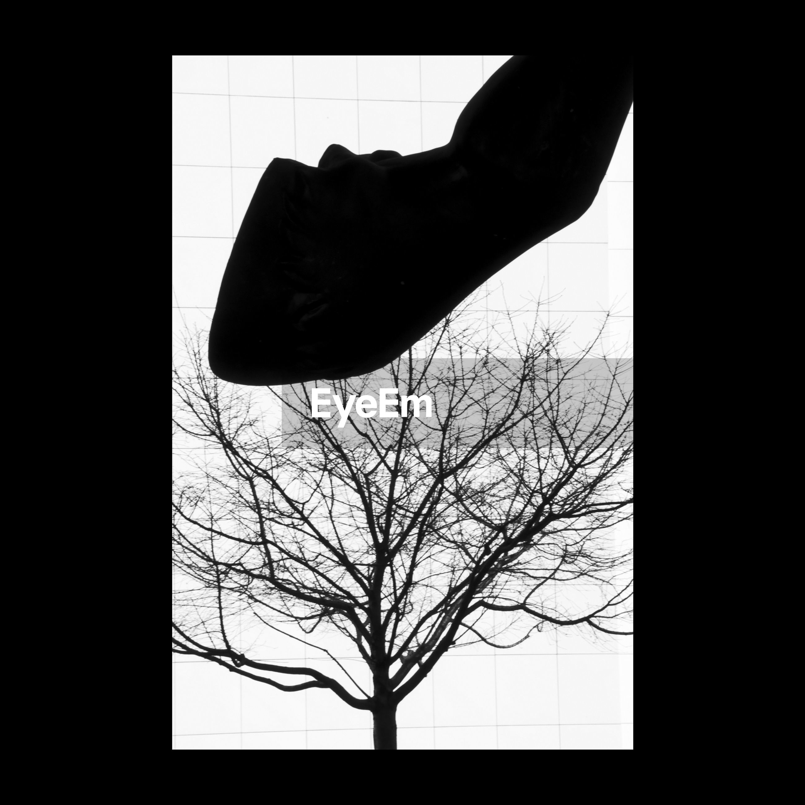 silhouette, branch, transfer print, animal themes, one animal, tree, bare tree, auto post production filter, wildlife, indoors, nature, copy space, close-up, beauty in nature, clear sky, vignette, one person, animals in the wild, studio shot