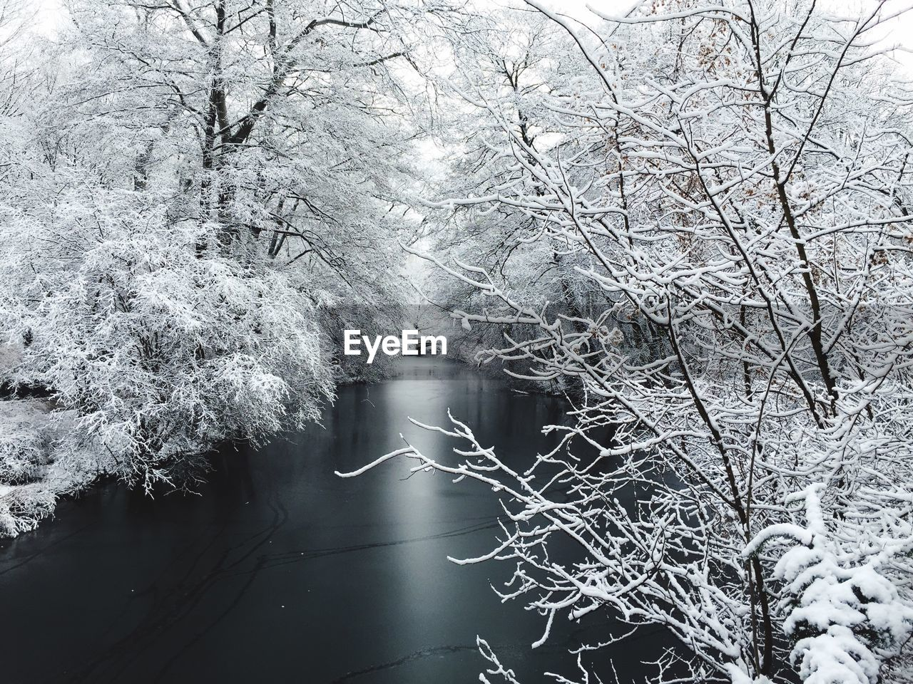 winter, cold temperature, nature, tree, branch, bare tree, no people, beauty in nature, snow, outdoors, frozen, day, water, tranquility