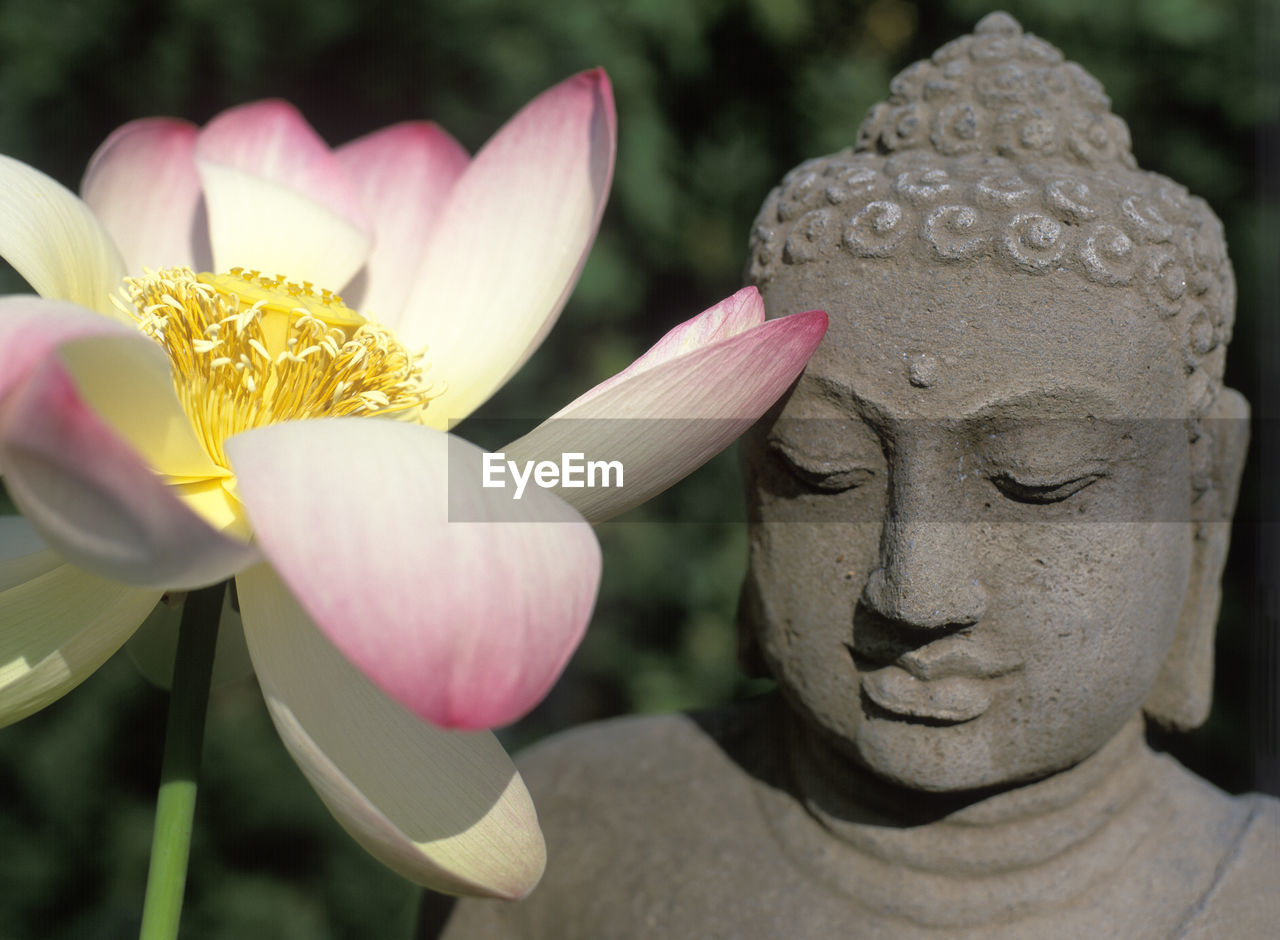 flower, flowering plant, plant, close-up, human representation, representation, pink color, sculpture, statue, art and craft, no people, freshness, focus on foreground, beauty in nature, nature, religion, day, vulnerability, fragility, growth, outdoors, flower head, lotus water lily