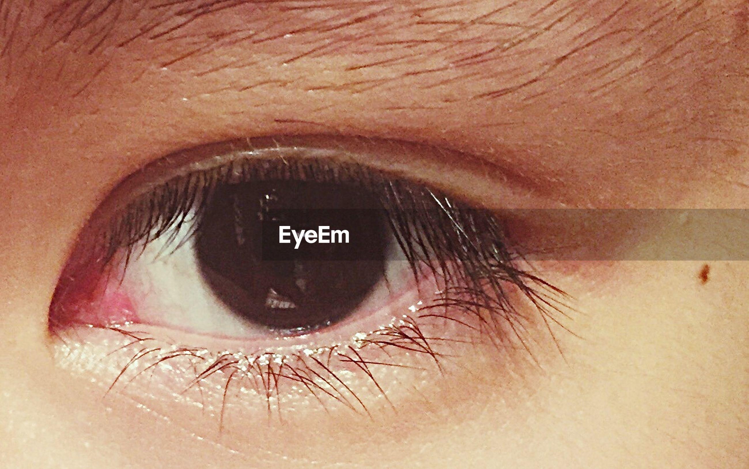 human eye, indoors, eyelash, close-up, eyesight, extreme close-up, part of, looking at camera, portrait, sensory perception, lifestyles, eyeball, human skin, human face, iris - eye, unrecognizable person, extreme close up