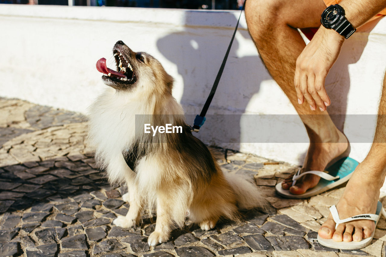 one animal, domestic animals, mammal, domestic, one person, pets, vertebrate, low section, real people, canine, dog, human body part, day, human leg, nature, sunlight, men, body part, outdoors, pet owner, mouth open, human foot