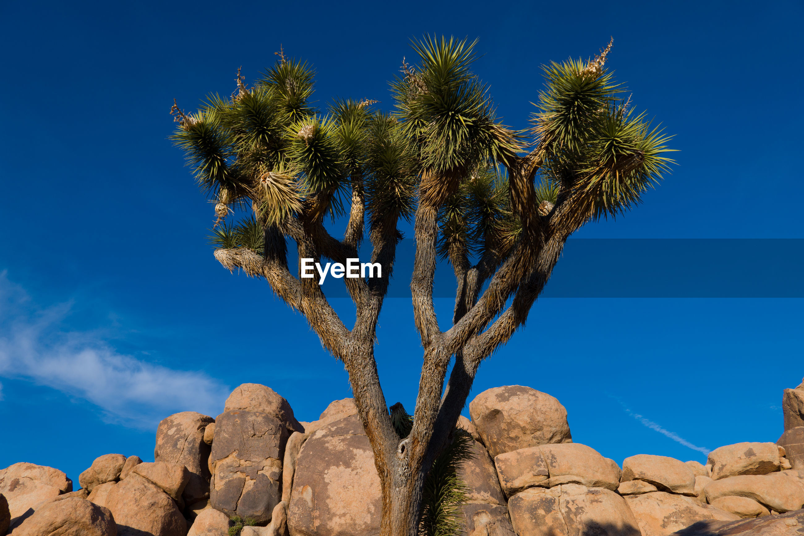 Low angle view of cactus growing on rock against blue sky