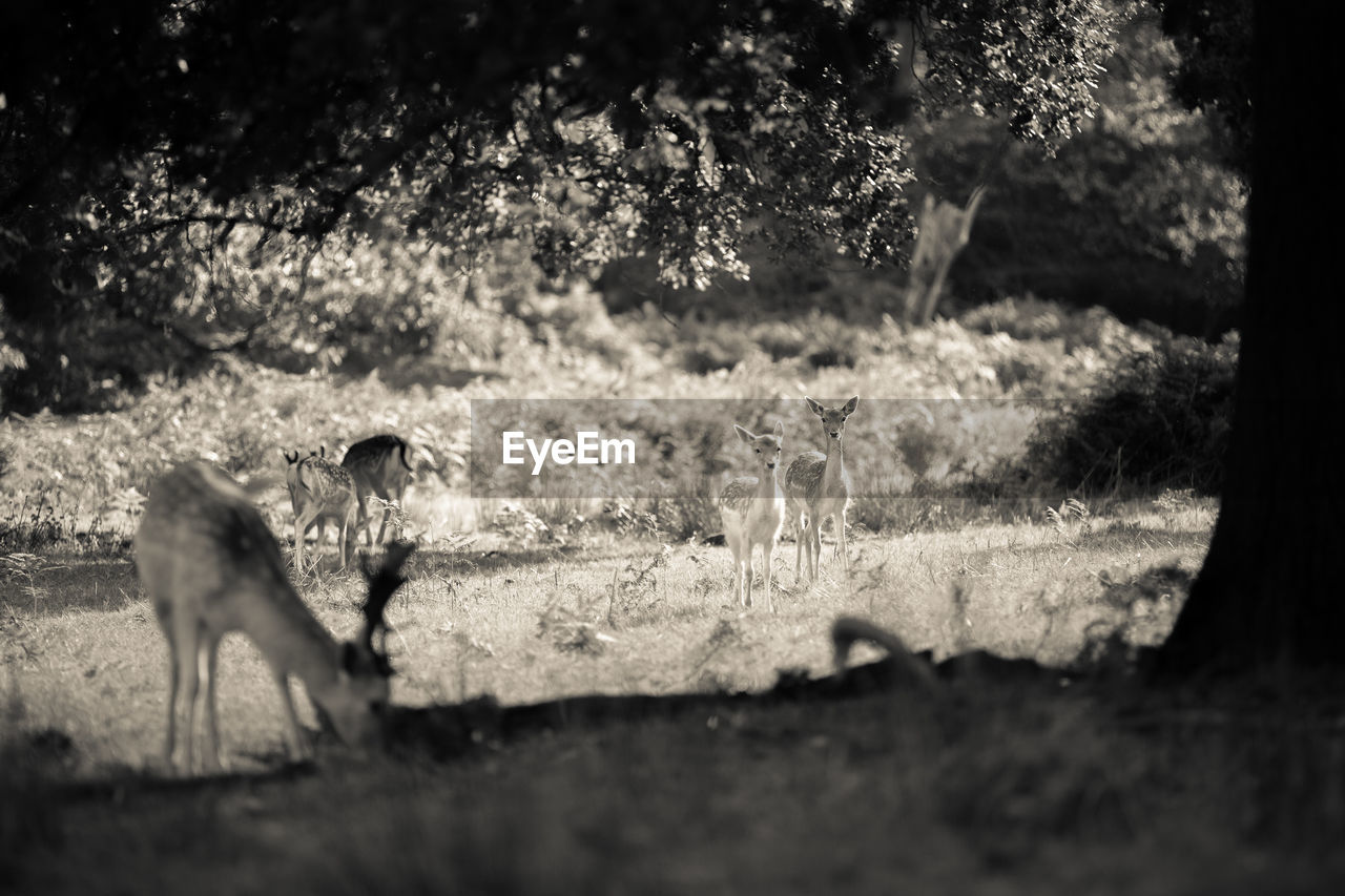 Deer Standing On Field At Forest