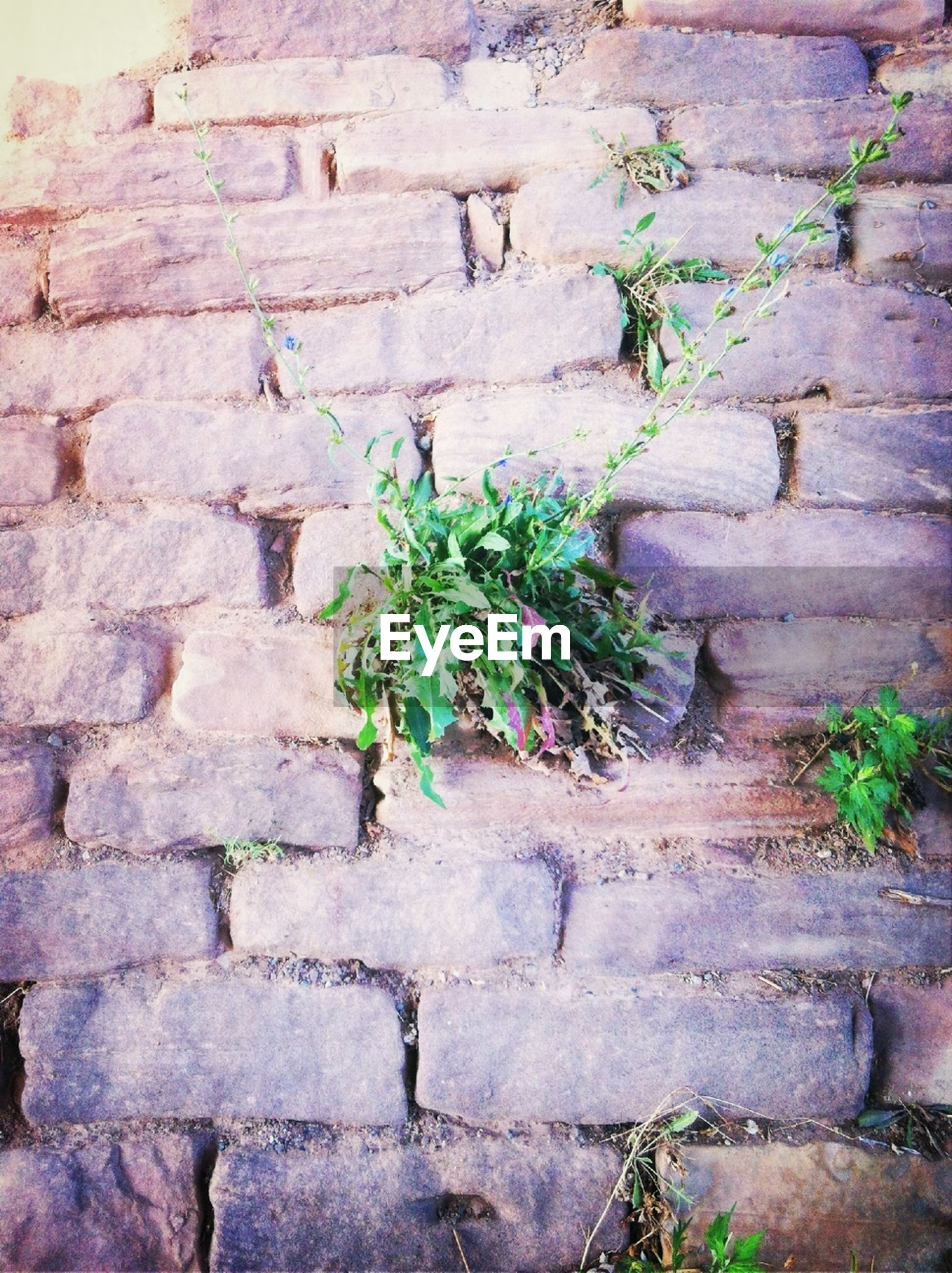 plant, stone wall, brick wall, wall - building feature, growth, built structure, architecture, growing, wall, building exterior, ivy, green color, textured, leaf, old, day, weathered, nature, outdoors, no people