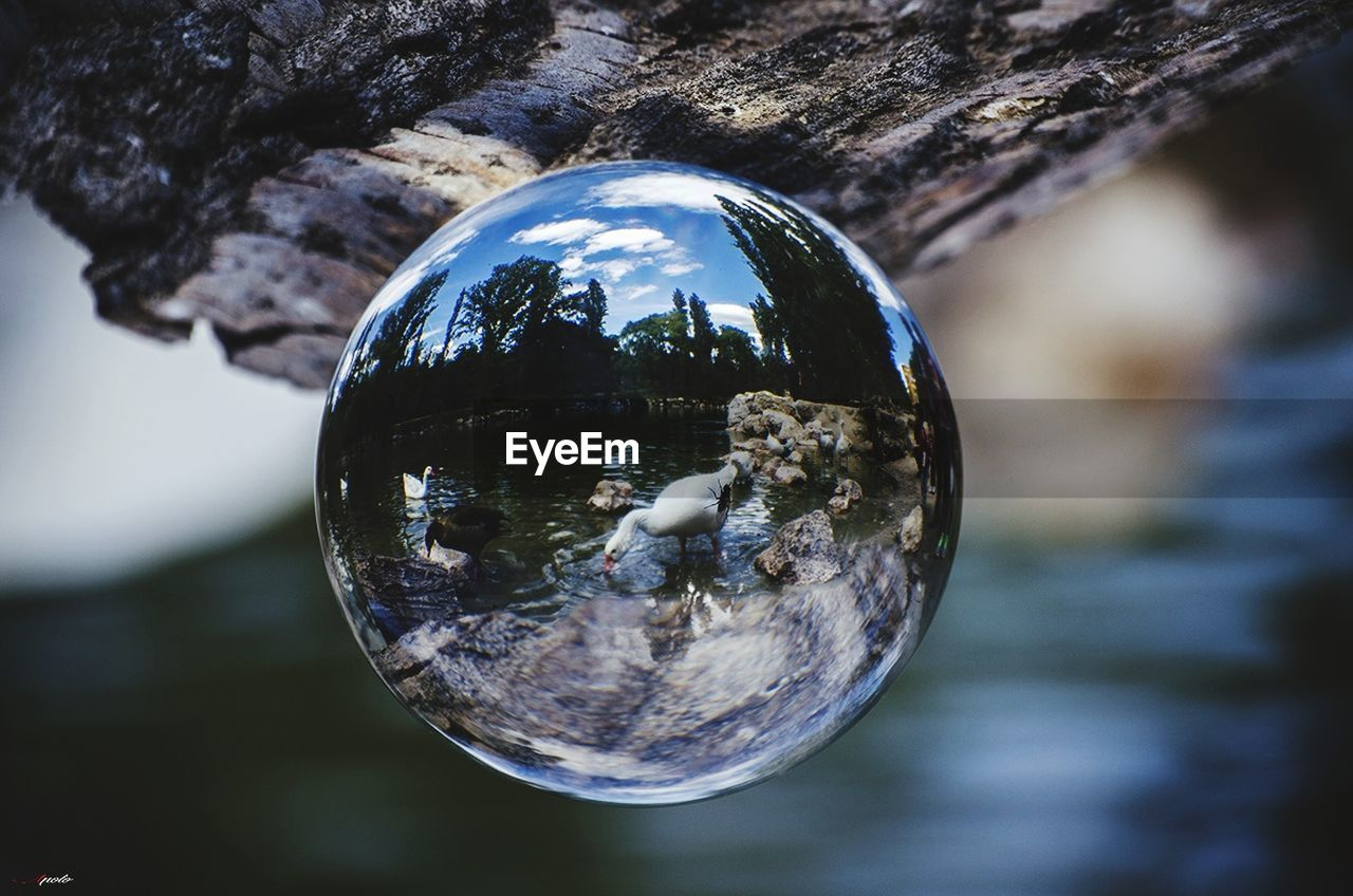 reflection, focus on foreground, crystal ball, close-up, no people, crystal, outdoors, day, fragility, nature, tree, sky