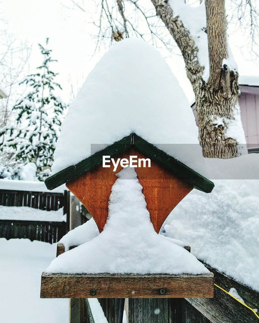 snow, winter, cold temperature, weather, no people, day, nature, frozen, white color, outdoors, tree, hanging, snowing, animal themes, sky, close-up