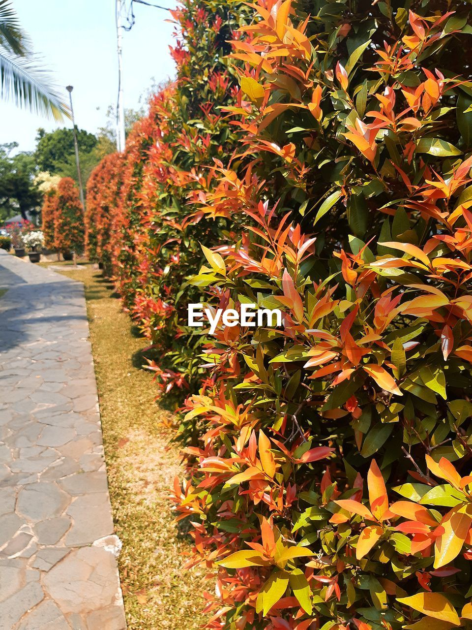 plant, growth, footpath, nature, tree, day, beauty in nature, no people, direction, the way forward, leaf, orange color, outdoors, plant part, sunlight, flowering plant, close-up, in a row, park, flower, diminishing perspective, change, treelined