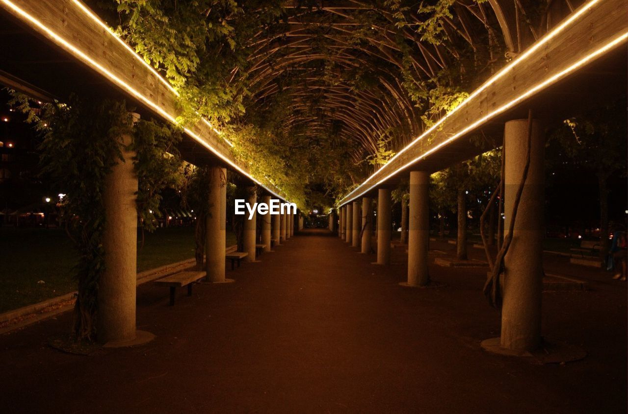 illuminated, architecture, architectural column, direction, night, the way forward, built structure, in a row, diminishing perspective, lighting equipment, indoors, no people, tree, arch, building, empty, vanishing point, absence, light - natural phenomenon, ceiling, colonnade, treelined