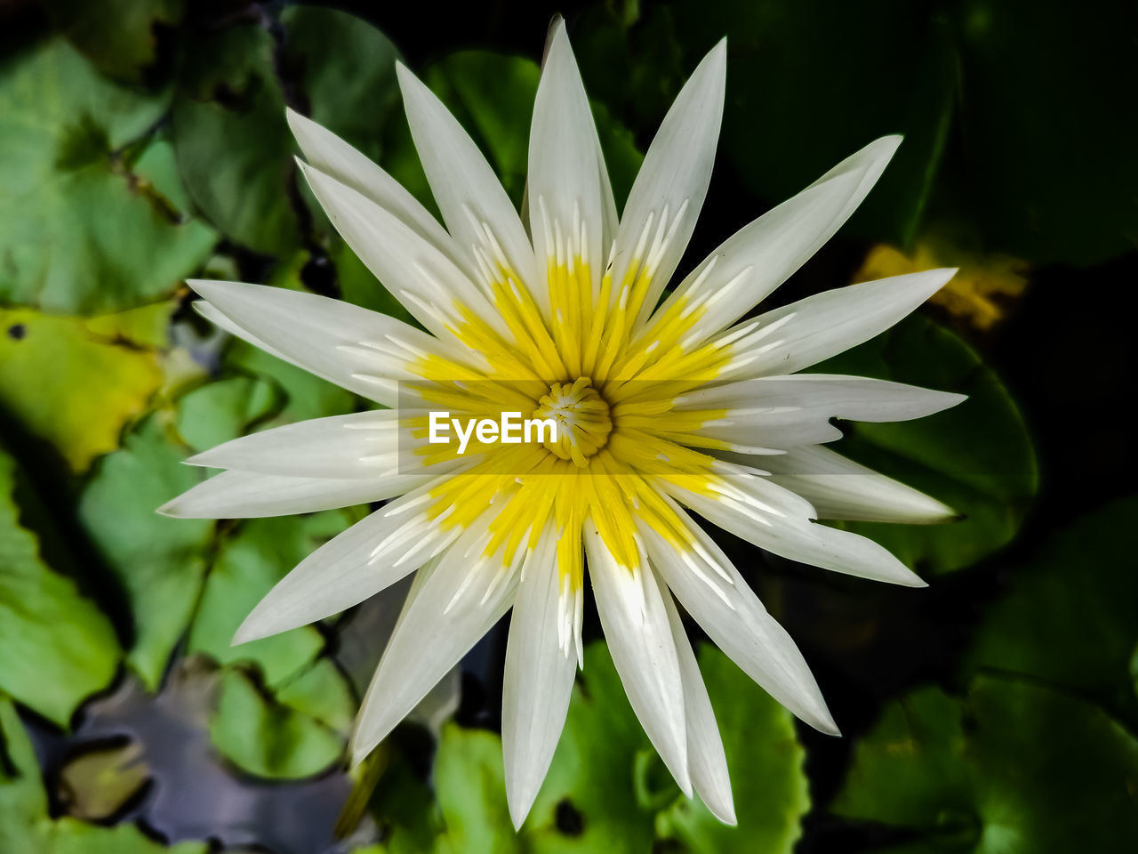 flower, flowering plant, fragility, vulnerability, plant, petal, flower head, freshness, inflorescence, beauty in nature, yellow, growth, close-up, nature, white color, focus on foreground, day, no people, pollen, gazania