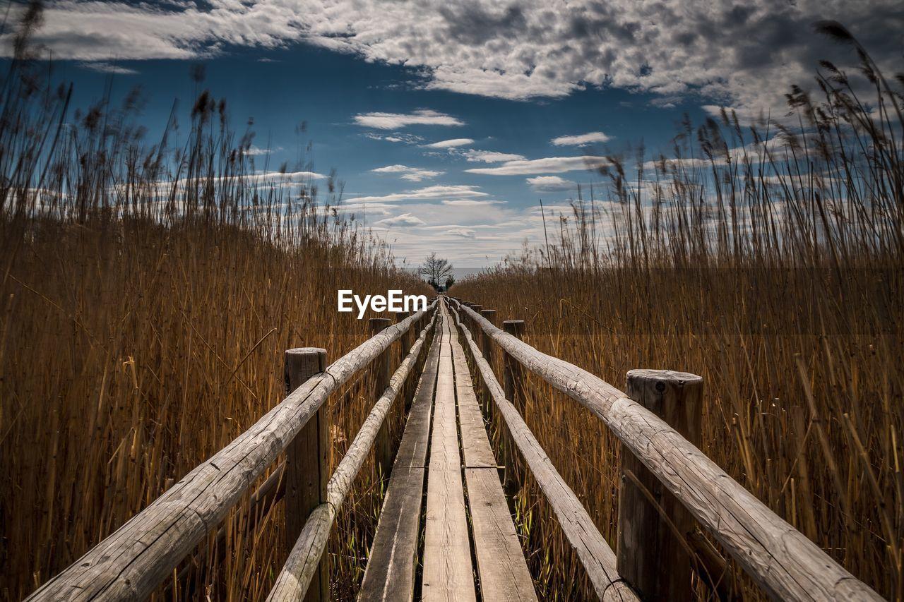 Boardwalk amidst reed against sky