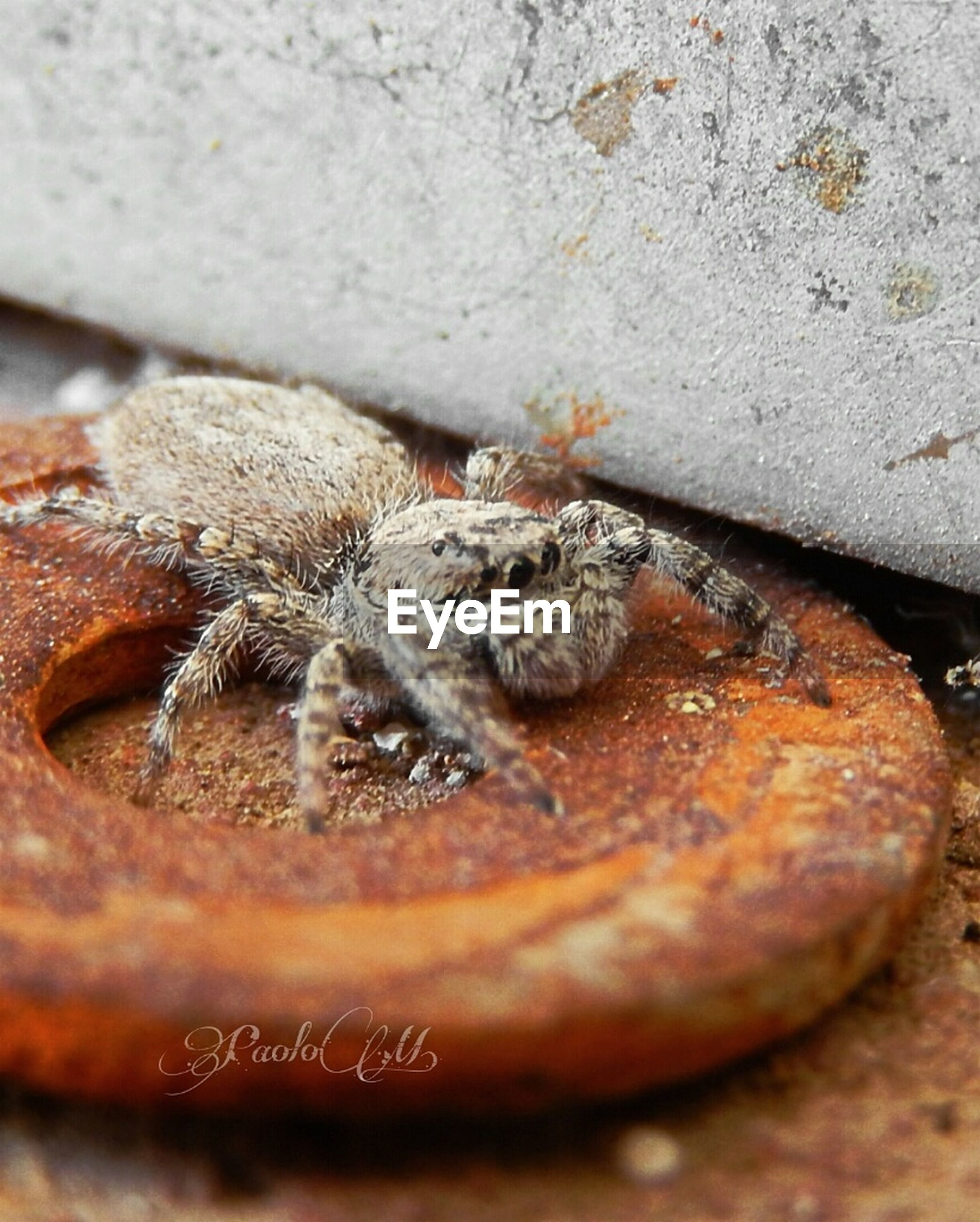 one animal, animal themes, selective focus, close-up, brown, full frame, outdoors, zoology, messy, no people, animal behavior