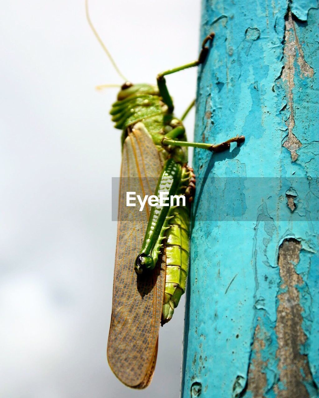 invertebrate, close-up, green color, insect, focus on foreground, plant, animals in the wild, animal wildlife, no people, animal themes, animal, day, nature, one animal, wood - material, tree, outdoors, tree trunk, hanging, beauty in nature, butterfly - insect
