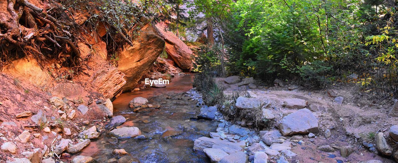 rock, solid, rock - object, water, beauty in nature, nature, plant, tree, no people, tranquility, land, day, stream - flowing water, forest, growth, scenics - nature, rock formation, outdoors, non-urban scene, flowing water, flowing, eroded