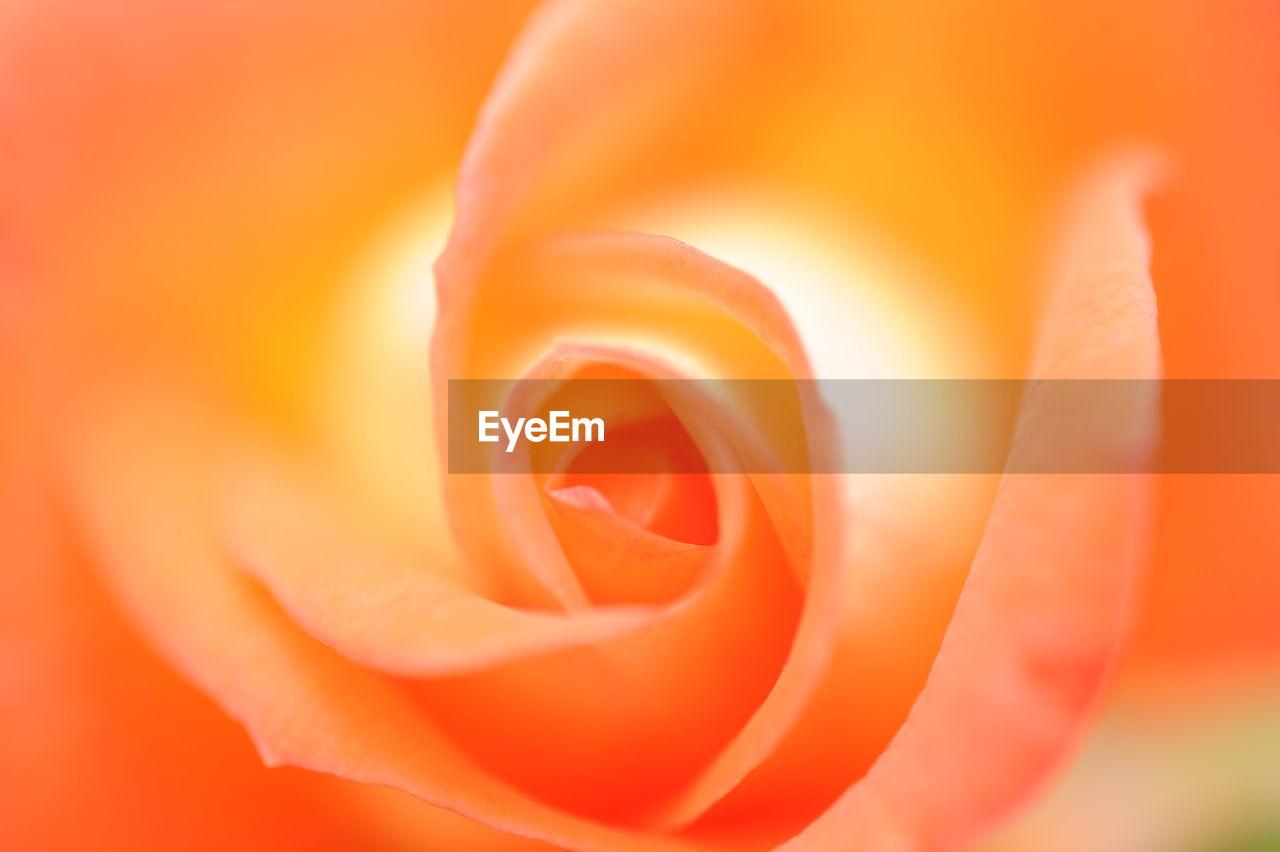 Close-Up Of Fresh Orange Flower