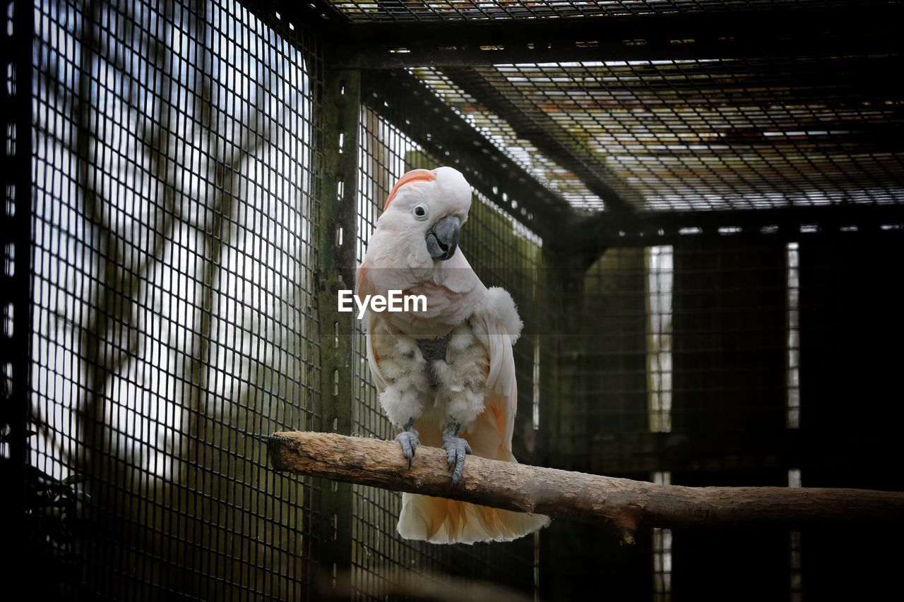 View Of Parrot Perching On Branch In Cage