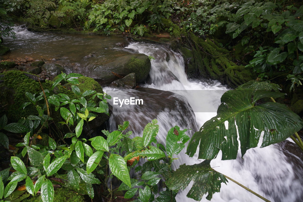 water, long exposure, flowing water, motion, waterfall, plant, beauty in nature, nature, blurred motion, scenics - nature, flowing, tree, forest, no people, green color, growth, land, rock, plant part, outdoors, stream - flowing water, power in nature