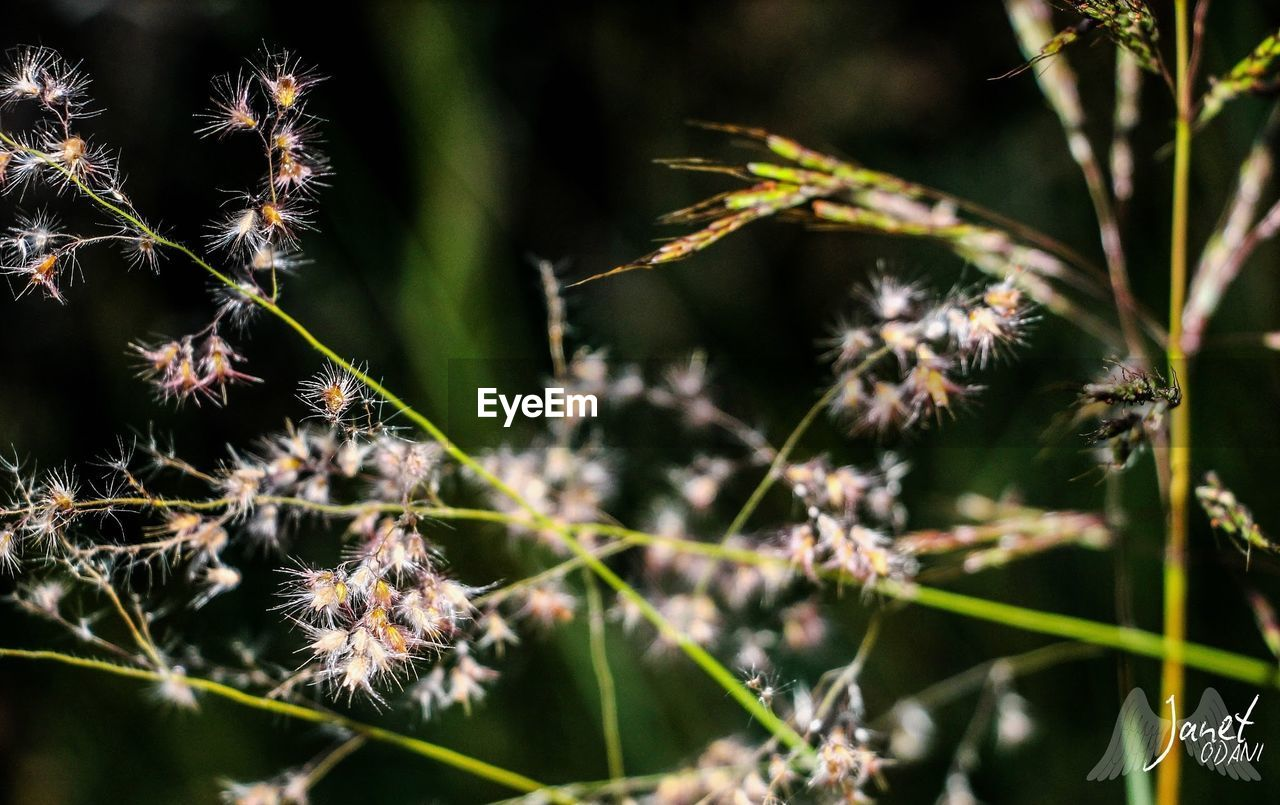 plant, growth, close-up, nature, beauty in nature, no people, day, selective focus, fragility, focus on foreground, vulnerability, outdoors, flower, flowering plant, plant part, tranquility, leaf, freshness, sunlight, plant stem