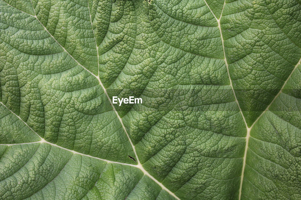green color, leaf, plant part, plant, growth, full frame, backgrounds, leaf vein, close-up, no people, beauty in nature, nature, day, natural pattern, pattern, outdoors, freshness, botany, textured, tree, leaves
