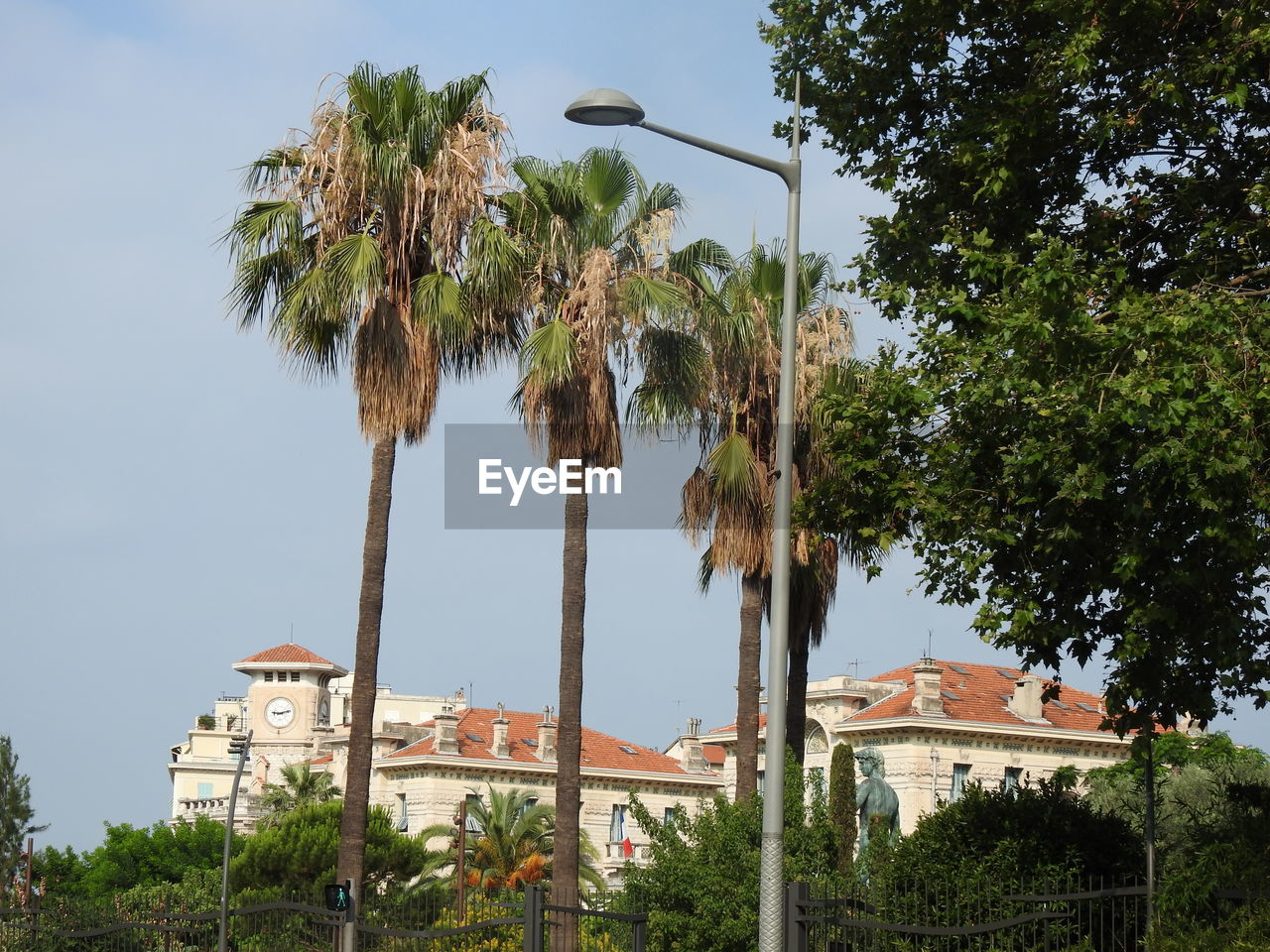 tree, plant, architecture, building exterior, built structure, sky, nature, no people, day, building, palm tree, growth, city, green color, tropical climate, low angle view, outdoors, residential district, street, house