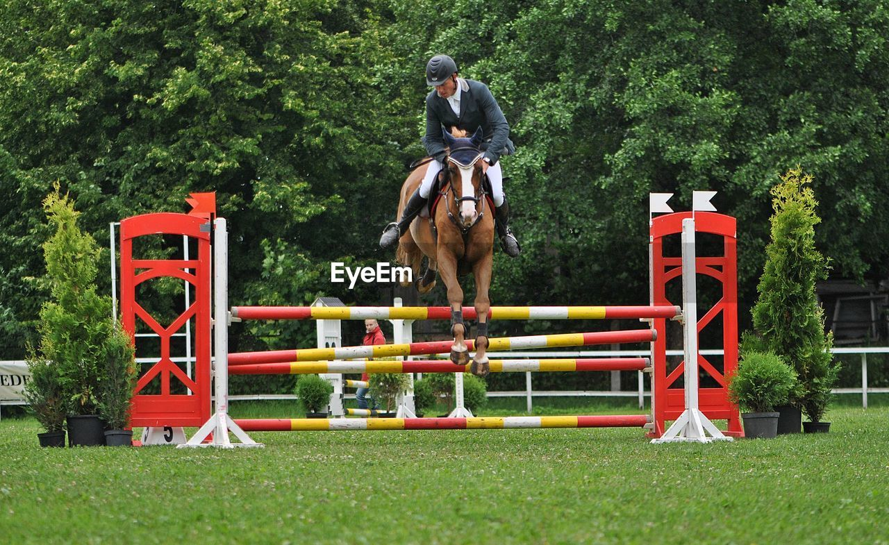Jockey with horse jumping on hurdle