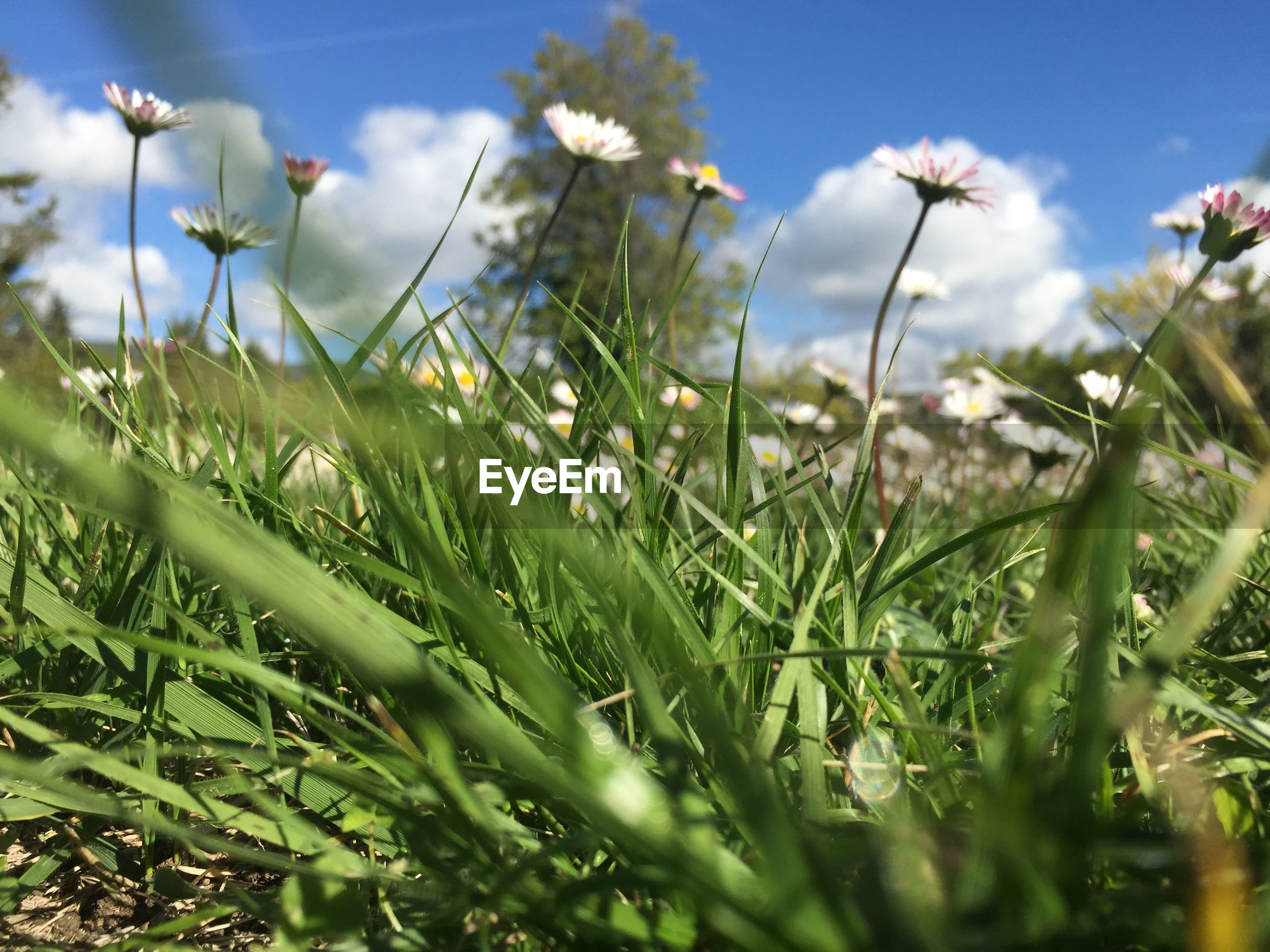 growth, field, nature, plant, beauty in nature, selective focus, flower, no people, day, grass, outdoors, green color, fragility, freshness, close-up, sky, flower head